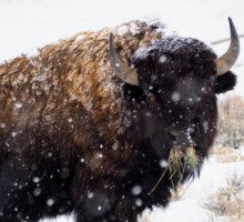 Late February Wildlife Update From Ecotour Adventures