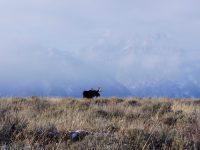 Renee Seidler: Wildlife advocate, winter enthusiast,  Executive Director at the Jackson Hole Wildlife Foundation